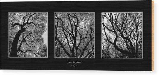 Trees In Threes Wood Print by Diane C Nicholson