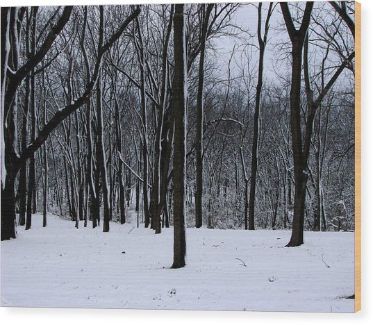 Trees In Winter Wood Print by Dave Clark