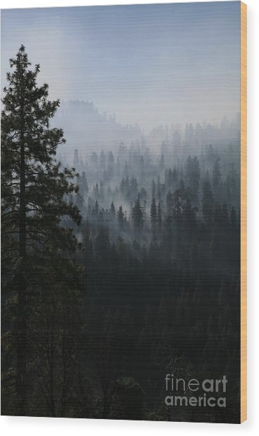 Trees In Yosemite Wood Print