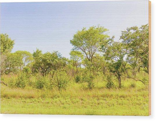 Trees In Zambia Wood Print