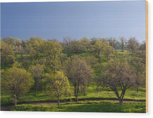 Trees On Hillside Wood Print