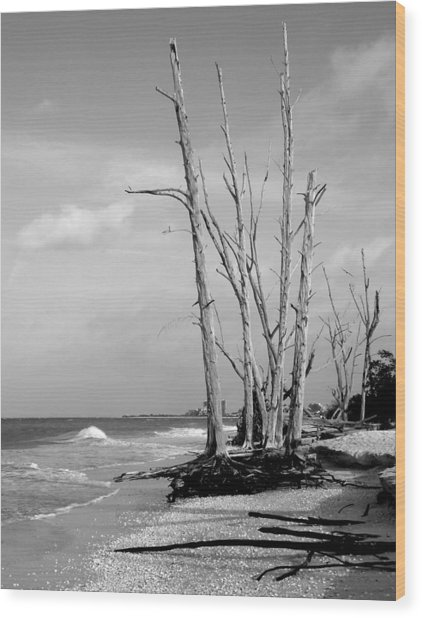 Trees On The Beach Black And White Wood Print by Rosalie Scanlon