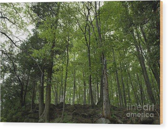 Trees On The Edge Wood Print