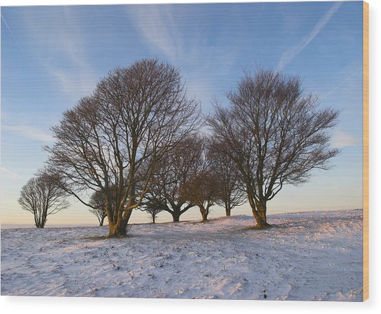 Trees On The Ring Wood Print