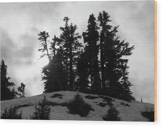 Trees Silhouettes Wood Print