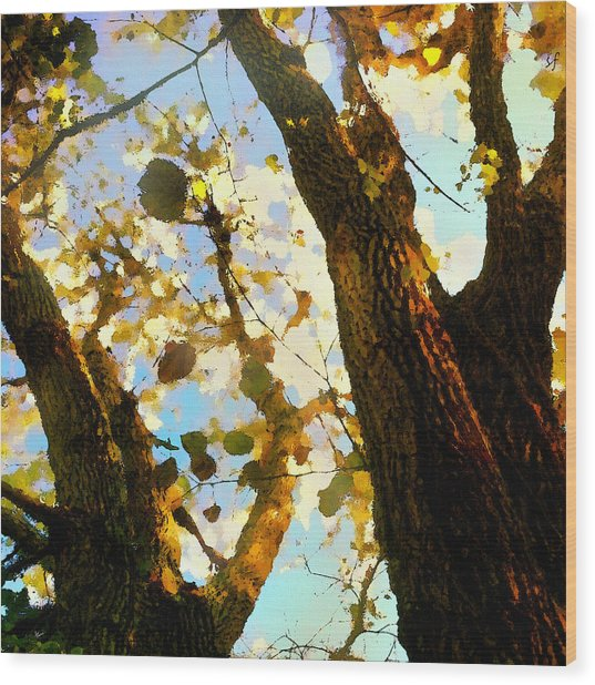 Wood Print featuring the digital art Treetop Abstract-look Up A Tree by Shelli Fitzpatrick