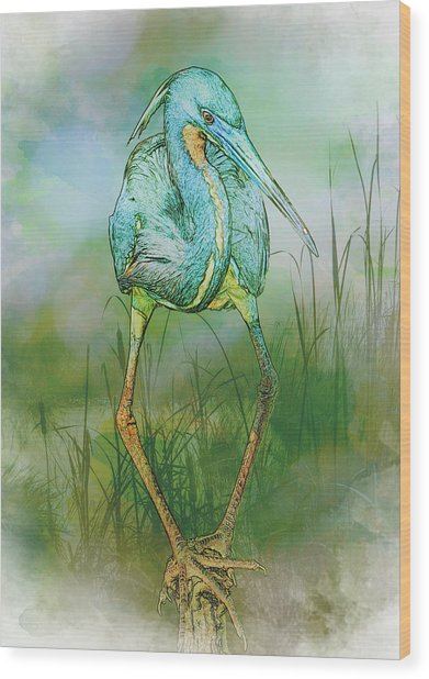 Tri-colored Heron Balancing Act - Colorized Wood Print