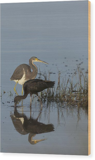 Tri-colored Heron And Glossy Ibis Wood Print