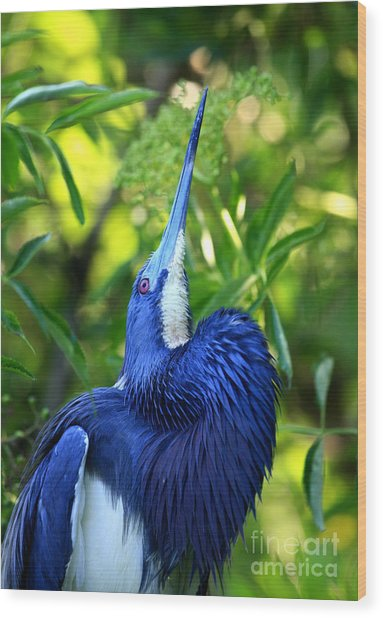 Tri-colored Heron Head Throw Wood Print