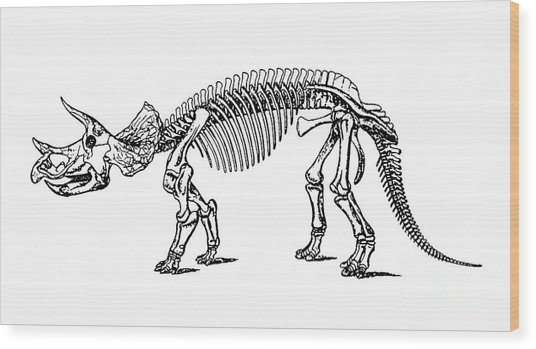 Triceratops Dinosaur Tee Wood Print