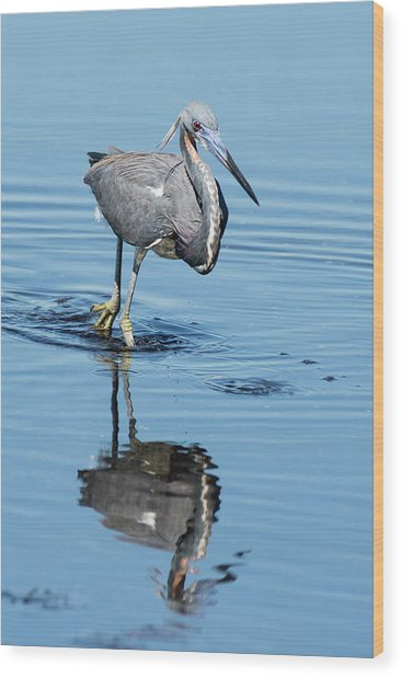 Tricolored Heron Full Tilt Wood Print
