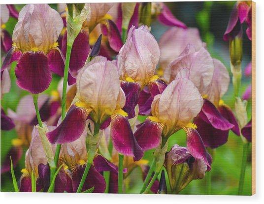 Tricolored Irisses Wood Print
