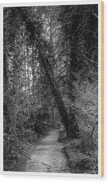 Trilha--bosque Do Silencio-campos Do Jordao-sp Wood Print