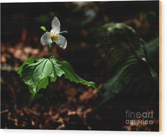 Trillium In The Woods Wood Print by Sharon Talson