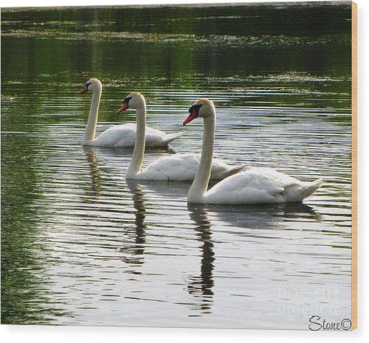 Triplet Swans Wood Print