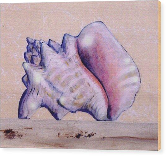 Trompe L'oeil Conch Shell Wood Print