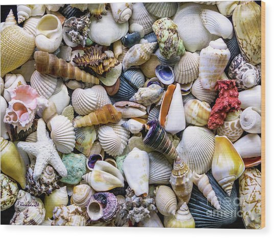 Tropical Beach Seashell Treasures 1500a Wood Print