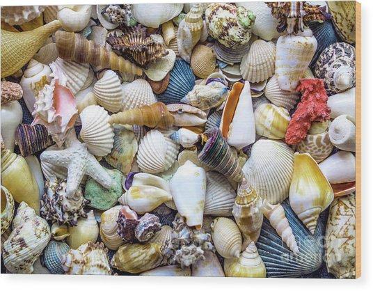 Tropical Beach Seashell Treasures 1529b Wood Print