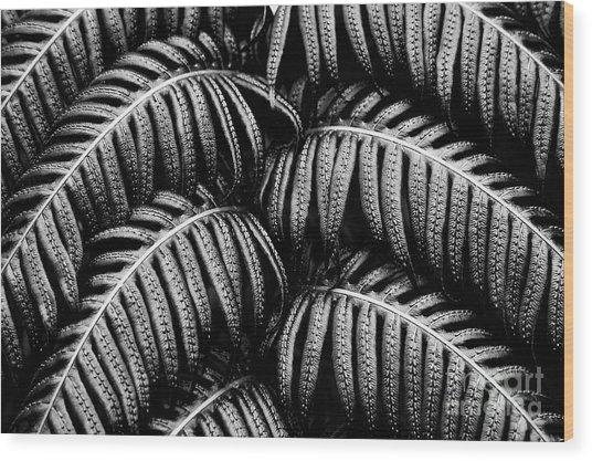 Tropical Fern Black White Wood Print