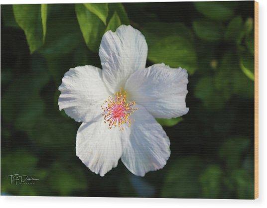 Tropical Flower 2 Wood Print