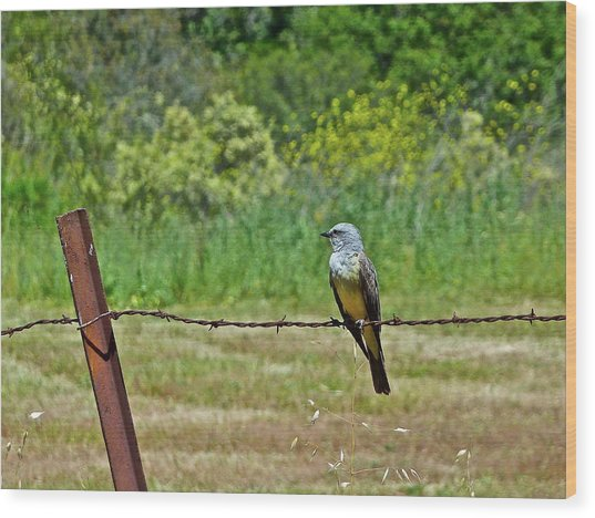 Tropical Kingbird Wood Print