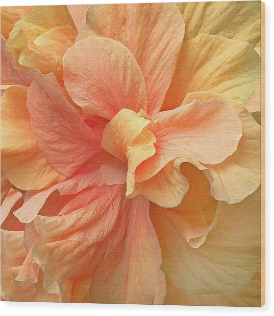 Tropical Peach Hibiscus Flower Wood Print