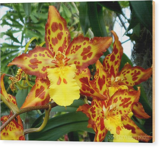 Tropical Red And Yellow Orchids Wood Print