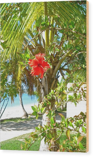 Tropical Spring Flower Wood Print