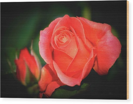 Tropicana Rose Wood Print