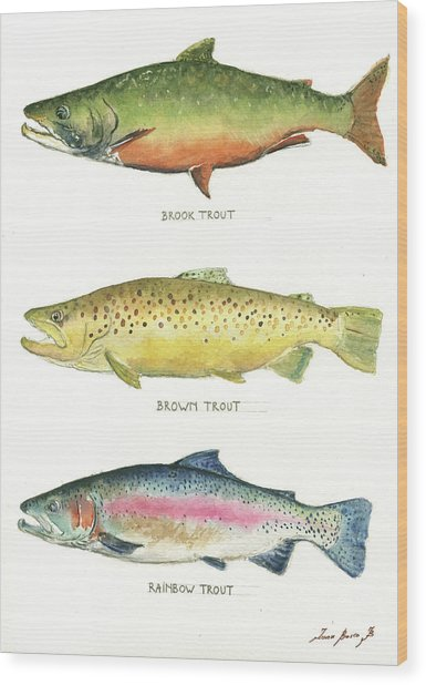 Trout Species Wood Print