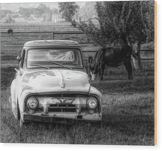 Truck And Cows Living Together Bw Wood Print