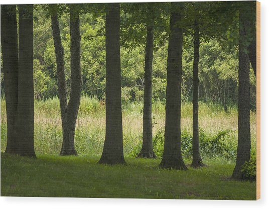 Trunks In A Row Wood Print