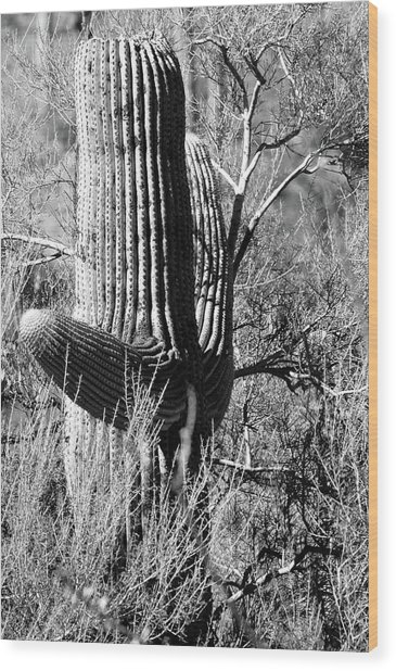 Tucson Cactus No. 3-1 Wood Print
