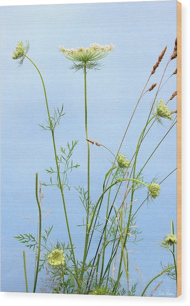 Tuft Of Queen Anne's Lace Wood Print