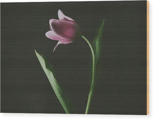 Tulip #0152 Wood Print