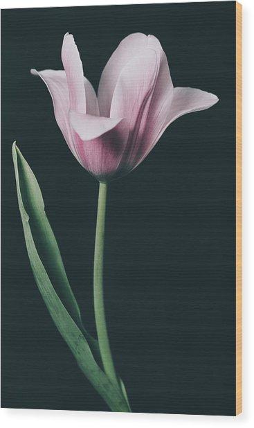 Tulip #0153 Wood Print