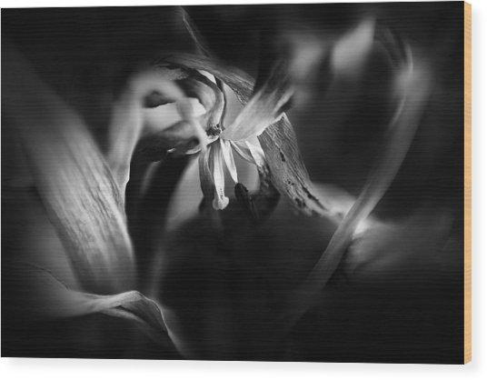 Tulip 05 Wood Print by Nora Batternay