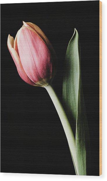 Tulip #171 Wood Print