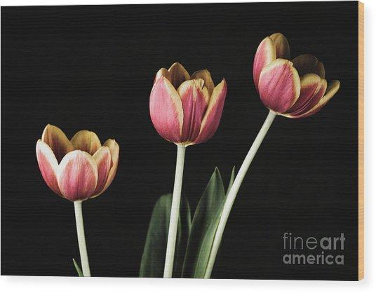 Tulip #176 Wood Print