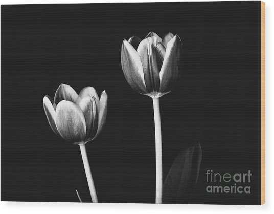 Tulip #177 Wood Print