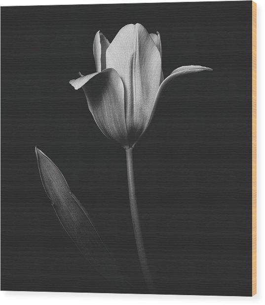 Tulip 0155 Wood Print