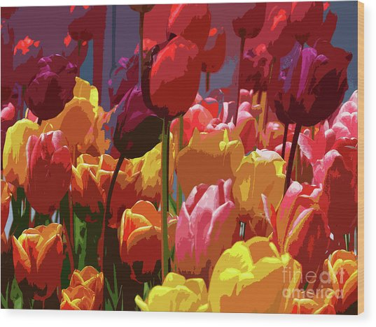 Tulip Confusion Wood Print