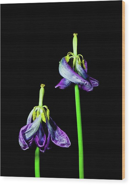Tulip Dance Wood Print