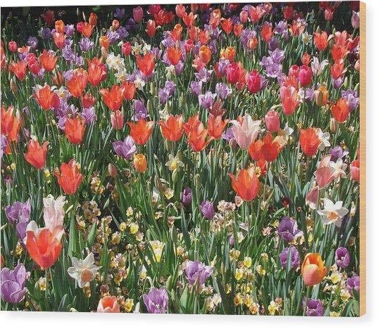 Tulip Delight 2 Wood Print by Shiana Canatella