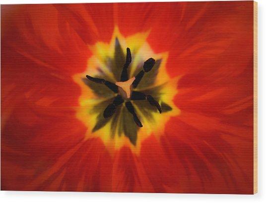 Tulip Explosion Kaleidoscope Wood Print