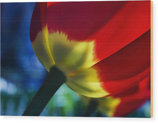 Tulip Expression Wide Wood Print by Shawn Young