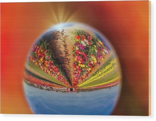 Wood Print featuring the photograph Tulip Farm Reflections And Refractions by Susan Candelario