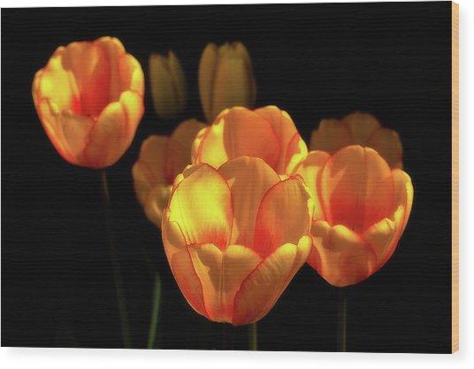 Tulip Festival Participants Wood Print