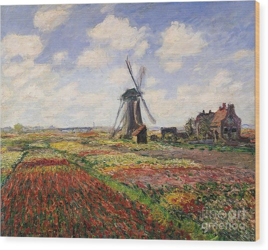 Tulip Fields With The Rijnsburg Windmill Wood Print