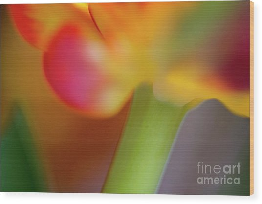 Tulip Flower Abstract Wood Print